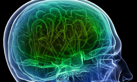 the importance of the human brain Extensive research by the university of miami's touch research institute has revealed that human touch has  importance of human touch  of the brain and when.
